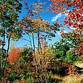 Autumn Maples by Frank Townsley