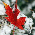 Autumn Meets Winter by Cathy Beharriell