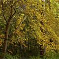 Autumn Mellowness  by Ola Allen