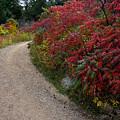 Autumn Mesa Trail by George Tuffy