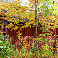 Autumn Michigan Barn  by John McGraw