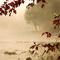 Autumn Mist by Tony Beaver