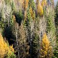 Autumn Mix by Idaho Scenic Images Linda Lantzy