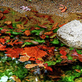 Autumn Mix by Ronda Ryan