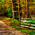 Autumn Moment - Allaire State Park by Angie Tirado