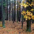 Autumn Morning by Paul Sachtleben