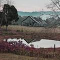 Autumn Morning by Randy Ball