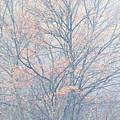 Autumn Morning Sugar Maple by Thomas R Fletcher