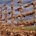 Autumn Net by James Peterson