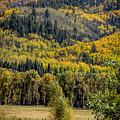 Autumn On A Colorado Range by Janice Pariza