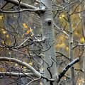 Autumn On My Mind by Ellen Heaverlo