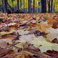 Autumn On The Forest Floor by Rick Berk