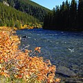 Autumn On The Maligne River by Larry Ricker