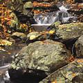 Autumn On The Rocks by Stephen  Vecchiotti