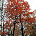 Autumn Orange by Carolyn Postelwait