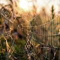 Autumn Orb Weaver by Alyssa Najewicz