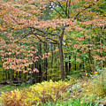 Autumn Paints A Dogwood And Ferns by Mother Nature
