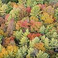 Autumn Palette by Bruce Neumann