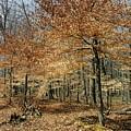 Autumn Paradise by Elizabeth Duggan