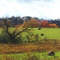 Autumn Pasture by David Lane