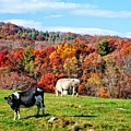 Autumn Pastures by Lynn Bauer