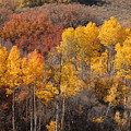 Autumn Patchwork by Dennis Hammer