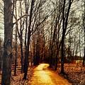 Autumn Path by Drue DeMatteis