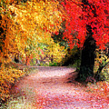 Autumn Path II by William Carroll