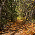 Autumn Path In Spearfish Canyon by Ray Van Gundy