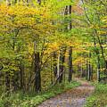 Autumn Path by Jill Lang