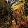 Autumn Path To Stewart Falls by Mandy Anderson