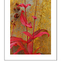 Autumn Penstemon Poster by Mike Nellums