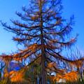 Autumn Pine Tree by Lilia D