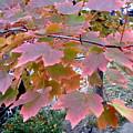 Autumn Pink 2 by Nancy Kane Chapman
