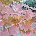 Autumn Pink by Nancy Kane Chapman