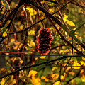 Autumn Poetry by Wolfgang Stocker
