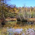 Autumn Pond by Charlene Cox