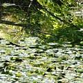 Autumn Pond by Valerie Ornstein