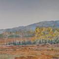 Autumn Poplars by Debbie Homewood