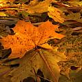 Autumn Quilt by David Andersen