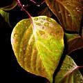 Autumn Rain by Will Borden