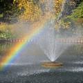 Autumn Rainbow by Ann Horn