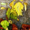 Autumn Rainbow by RC DeWinter