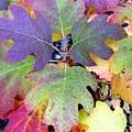 Autumn Rainbows by Mindy Newman