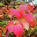 Autumn Red by Rene Larsen