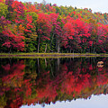 Autumn Reflected by David Patterson