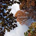 Autumn Reflection by Caroline  Urbania Naeem