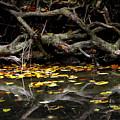 Autumn Reflection by Rachel Narvaez