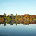 Autumn Reflections At Belmont Lake by Joan D Squared Photography