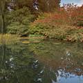 Autumn Reflections by Monika Tymanowska